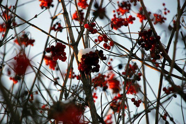 Buon Natale 2014 - Dario Flickr
